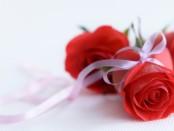 Regalar rosas rojas